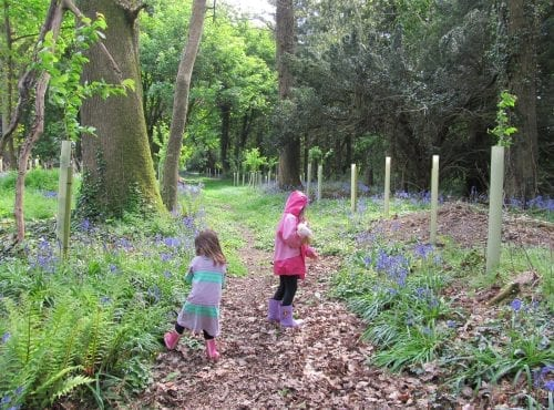 Four years after the Woodland Improvement Scheme (1)
