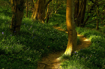 The Newsletter of Lancashire For Wood and the Lancashire Woodlands Project